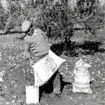 1 antica il rosone olio